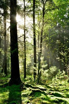 Idyllischer Wald von Günter Albers