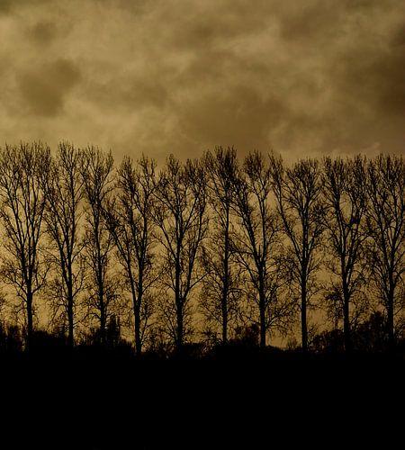 Laan olmen in silhouet tegen een bewolkte avondlucht.