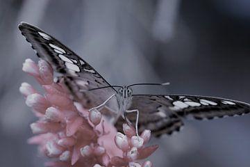 Vlinder in close up - butterfly in close up - Schmetterling - Papillon van Ineke Duijzer