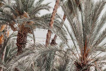 Palmbomen in Alicante van Shelena van de Voorde