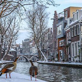 Twee nijlganzen kijken uit over de besneeuwde kades van de Oudegracht in Utrecht von Arthur Puls Photography