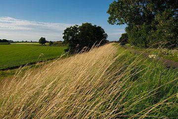 Hoher Maasdijk bei Haarsteeg-Rad von Verrassend Brabant