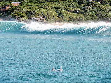 Dolfijnen spelend in de zee van Zuid Afrika van Stories by Pien