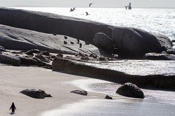Pinguins bij Kaap de Goede Hoop von Arthur van Iterson