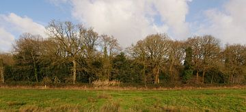 mantingerbos in het vroege voorjaar van Wim vd Neut