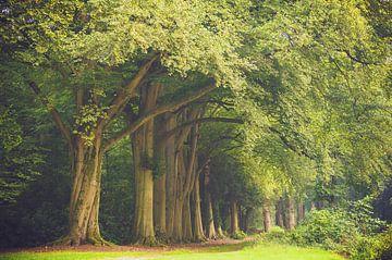 De bomenrij landgoed Bantam van