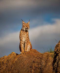 Lynx op de top van een heuvel van Laura Sanchez