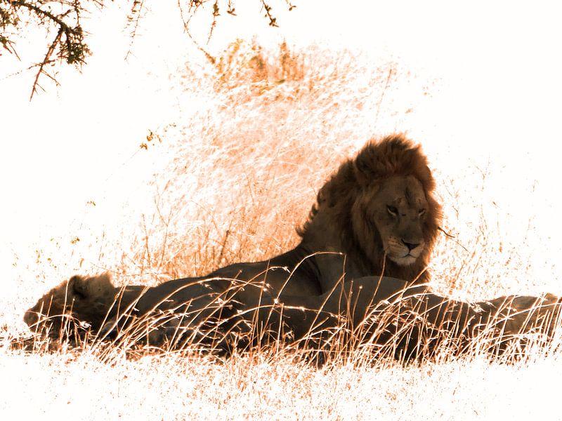 Lion Serengeti von Rianne Magic moments
