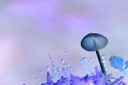 Purple Mushroom van