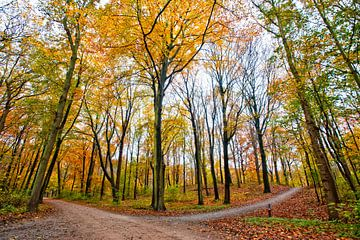 Herfst van Michel Groen