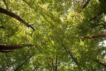 Groen bladerdak in het bos van Michel Knikker
