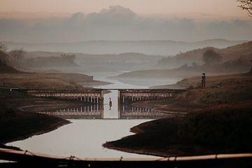 Reiher in den Amsterdamer Wasserversorgungsdünen bei Morgennebel von Michiel de Bruin