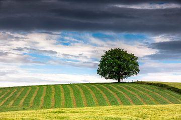 The tree sur Tilo Grellmann