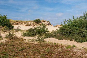 Die schönen Dünen von Meijendel bei Wassenaar von Mirjam Welleweerd