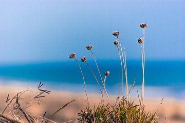 Atlantic Coast 6 van Norbert Sülzner