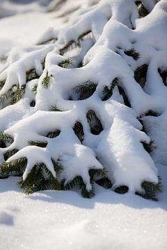 Verschneiter Tannenbaum in ländlicher Natur | Fine Art Photo Print | Poster von Karijn Seldam