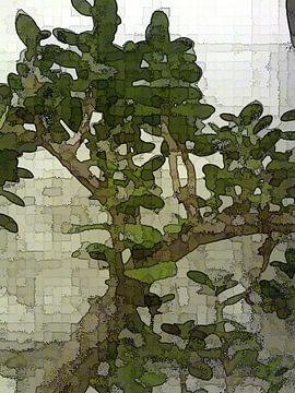 Crassula quadratisch von Henk-Jan van Tuyl