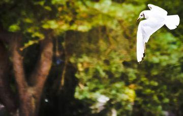White bird von melissa demeunier