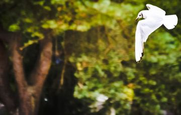 White bird van melissa demeunier