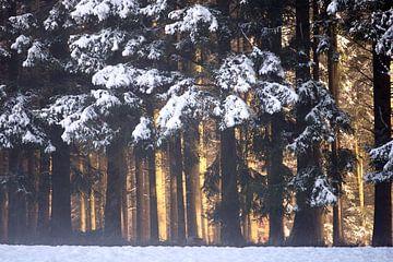 Licht im verschneiten Schwarzwald von Jana Behr