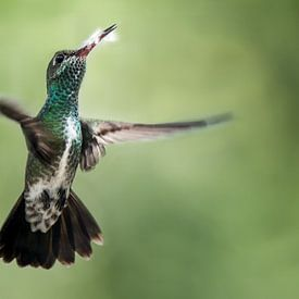 Vliegende Kolibrie met een mooie achtergrond von Peter Reijners
