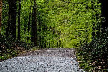 Hallerbos - 'Het blauwe bos' in 't grijs en 't groen van Ronald De Neve