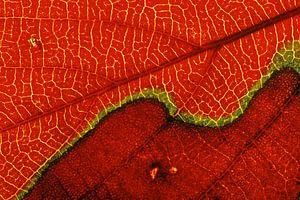 Detail opname van een herfstkleurig blad.
