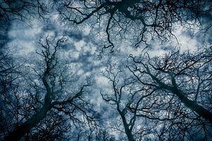 Dromerige bomen