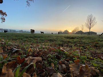 Kühe in der Morgensonne von Vivian Kolkman