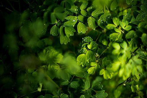 Druppels op groene blaadjes