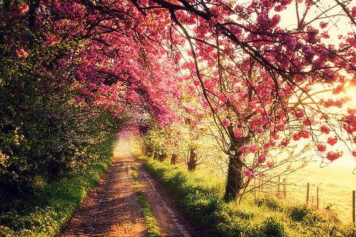 Pink morning sur