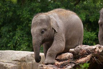 Aziatische olifant jong von Ronald en Bart van Berkel