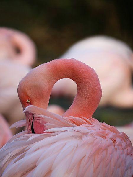 Close up van Flamingo van Karin Bazuin