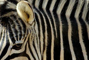Close-up Zebra: zwart wit gestreept von Margreet van der Voort