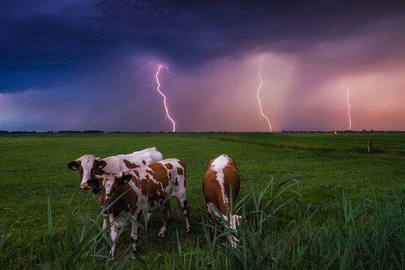 Holy Cow! van Albert Dros