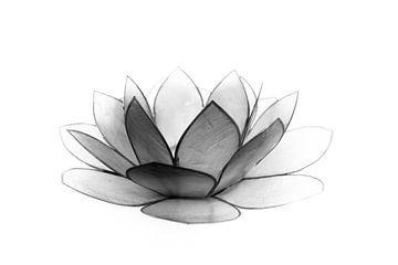 Lotusblume von Callista de Sterke