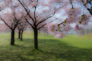 Japanse sierkers 02 van Moetwil en van Dijk - Fotografie
