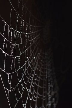 Spinnenweb met druppels zwarte achtergrond