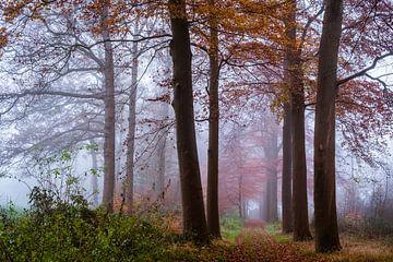 Dromerige dageraad van Tvurk Photography