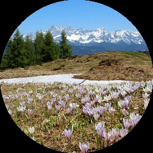 Lente in de bergen van Maja Smits