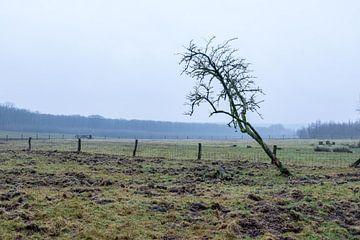 Einsamer Baum an einem nebligen Tag auf einer Wiese von Idema Media