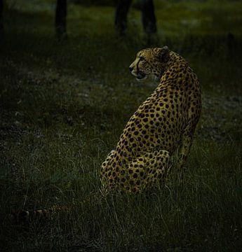 Gepard von Travelfury