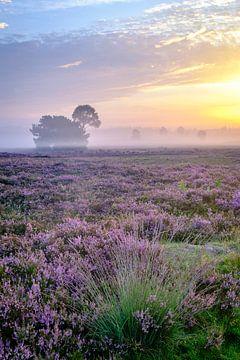 Blühende Heidepflanzen in einer Heidelandschaft bei Sonnenaufgang von Sjoerd van der Wal