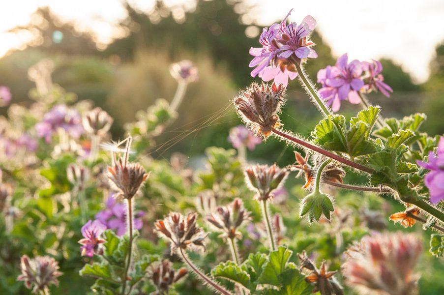 Ochtend-bloemen