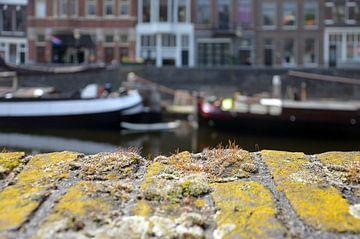 Stadsnatuur in Delfshaven, Rotterdam van Frans Blok