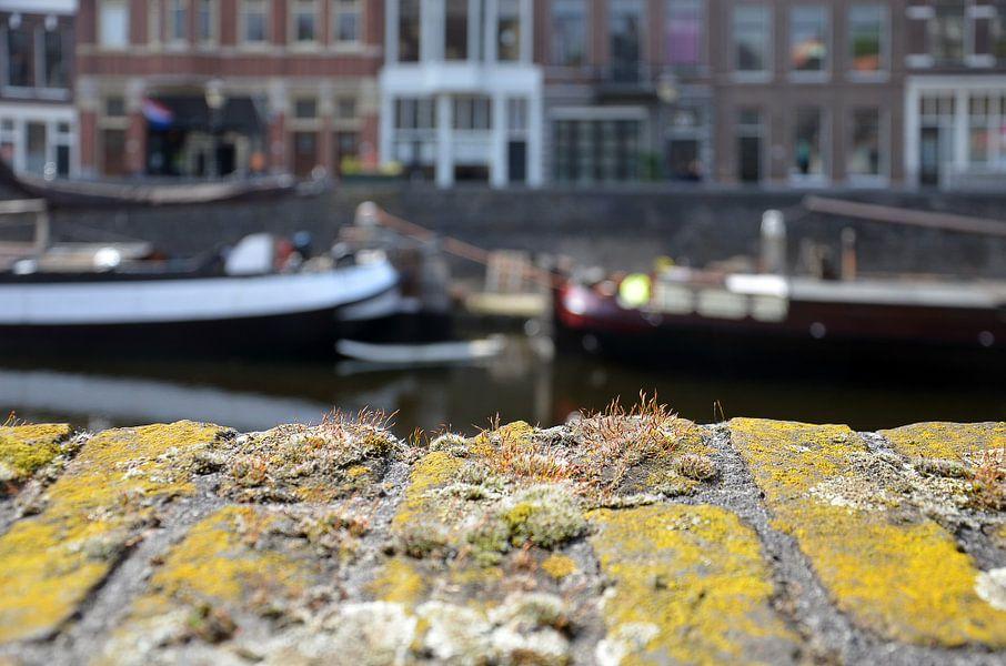 La nature urbaine à Delfshaven, Rotterdam sur Frans Blok