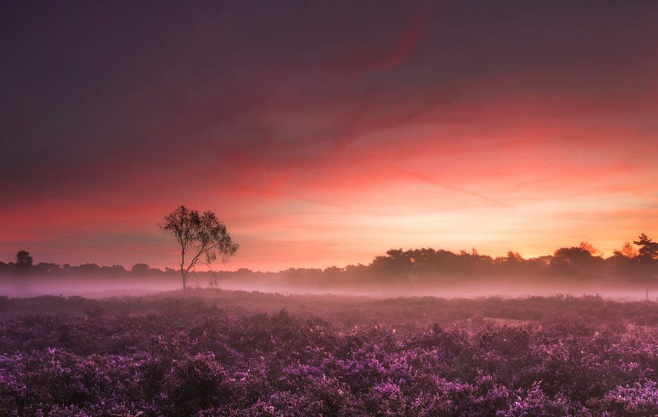 Zonsopkomst Kalmthoutse Heide van Dion van den Boom