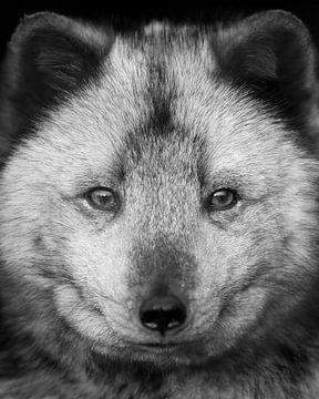 Polarfuchs-Porträt in Schwarz-Weiß von Patrick van Bakkum