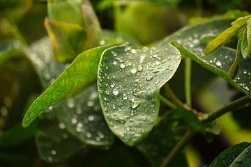 Waterdruppels op een blad van Simdwlf