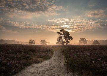 Heide landschap bij zonsopkomst van Susan van Etten